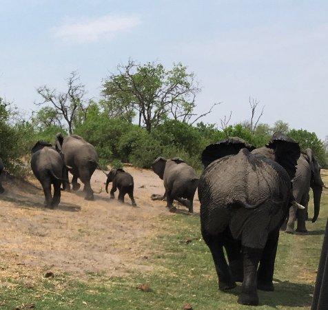 Linyanti Reserve, Botswana: Linyanti Ebony Bush Camp