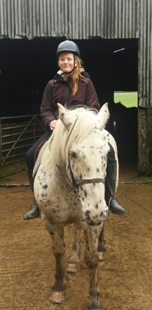 Springhill Farm Riding Stables: Horses for courses