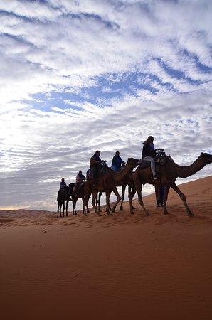 Meknès-Tafilalet, Marrocos: Dromedarissen in de Erg Chebbi