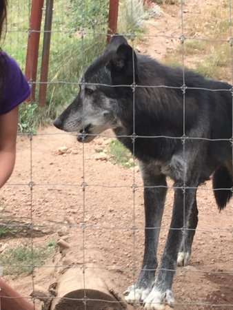 """Divide, CO: Awesome visit.  Check out my review titled """"wolftastic"""""""