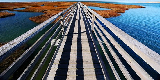 Yarmouth, MA: Bass Hole Boardwalk, November