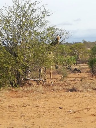 Timbavati Safari Lodge: IMG_20171111_155557_large.jpg