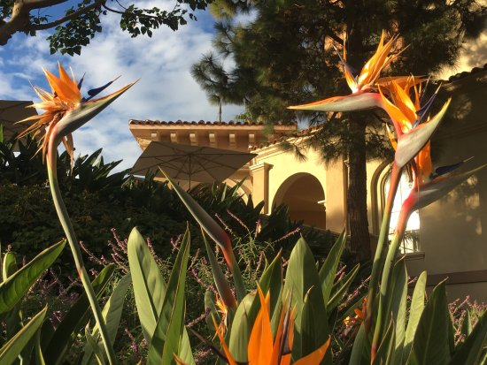 Marriott's Newport Coast Villas: Beautiful grounds