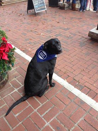 Dahlonega, GA: Izzy can often be found greeting visitors!