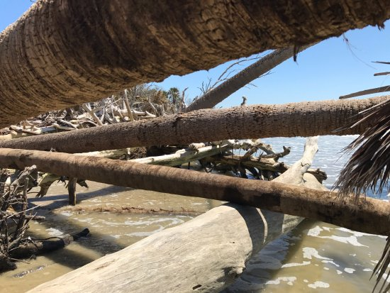 Edisto Island, SC: The north end of the island is eroding