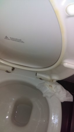 Braunton, UK: Disgusting toilet, stained with urine & grime