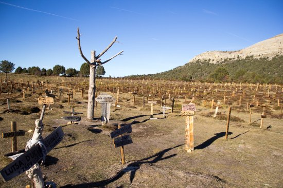 Santo Domingo de Silos, Hiszpania: Cementerio