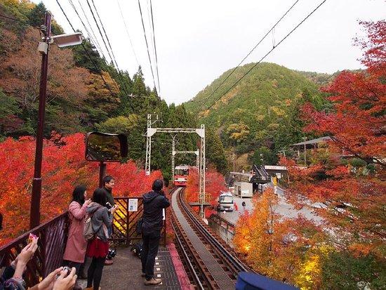 Eizan Railway Momiji Tunnnel : photo2.jpg