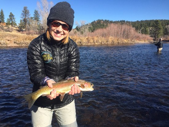 Picture of trouts fly fishing denver for Denver fly fishing guides