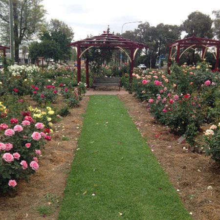 The Cowra Rose Garden