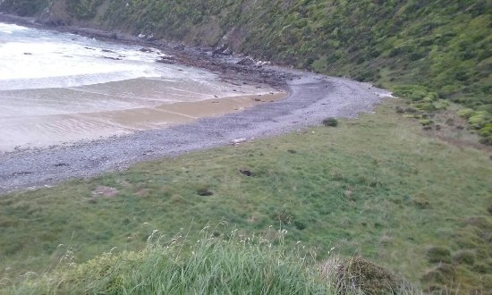 Kaka Point, New Zealand: 20171113_064012_large.jpg