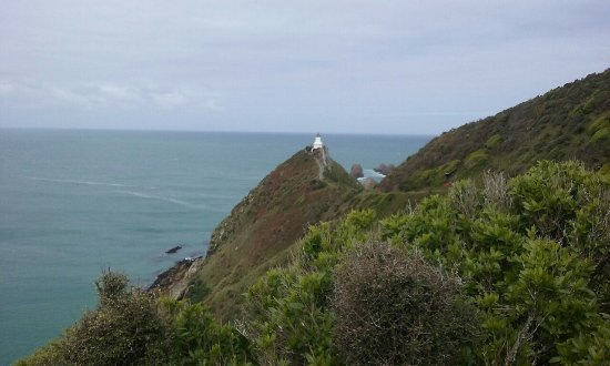 Nugget Point: 20171112_152320_large.jpg