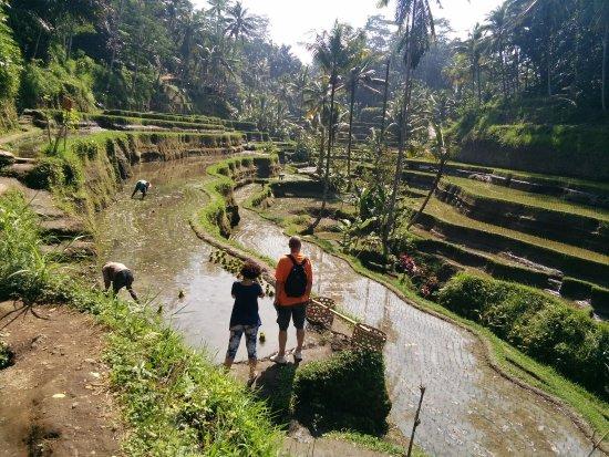 Ubud Bali Day Tour