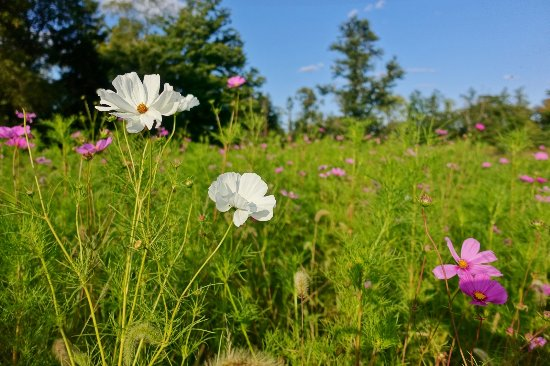 Meadow with flowers at Duke Farms