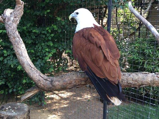 Blacktown, Australia: Kite