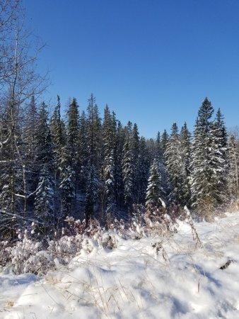 Patricia Ravine Trail