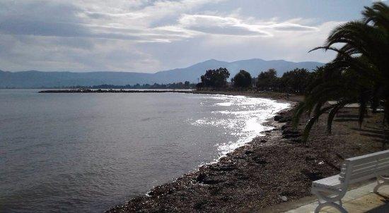 Livanates, กรีซ: Τμήμα της παραλίας στις Λιβανάτες