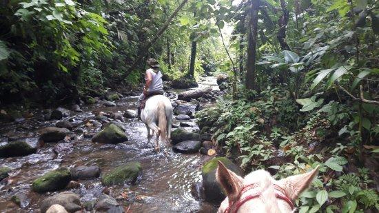 Alberto's Horses: 1510250262257_large.jpg