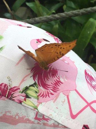 Bonville, Australia: Butterfly on my husband