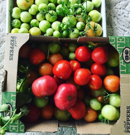 Manti, UT: Tomatoes from The Yardley Inn Garden end up in house made salsa for Huevos Rancheros, San Pete s