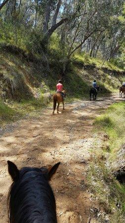 Tawonga, Australien: IMG-20171113-WA0003_large.jpg