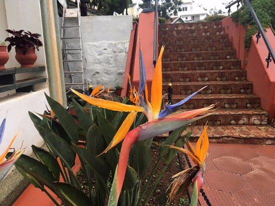سافوي هوتل: Doesnt this flower inspire one of the dance mudra's? :-)