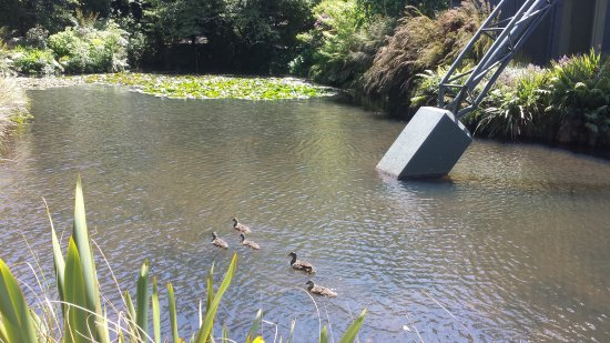 New Plymouth, New Zealand: Ducks in the lake