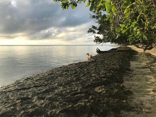 Leleuvia Island Resort: dogs on a beach
