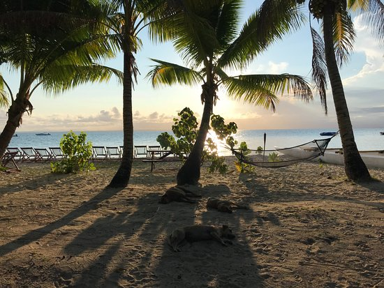 Leleuvia Island, Fiji: sun set from the dining area + dogs!