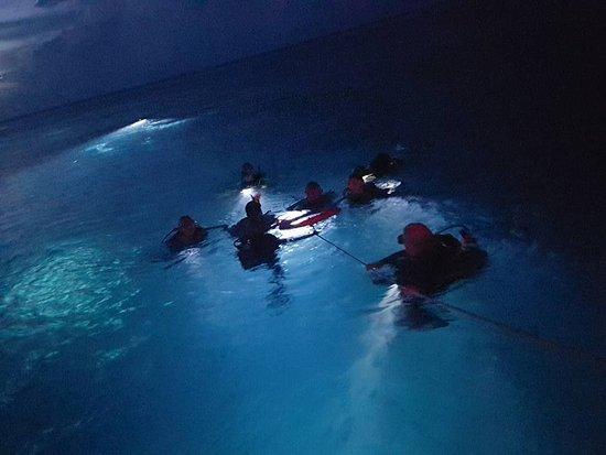 Centre De Plongee Des Ilets: Plongée de nuit dans le Jardin Japonnais