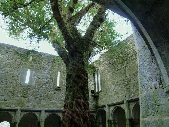 Muckross Abbey: photo0.jpg