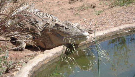 Geraldton, أستراليا: Say hello to the crocodile.