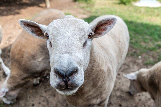 Cookley, UK: Animal feeding - always popular