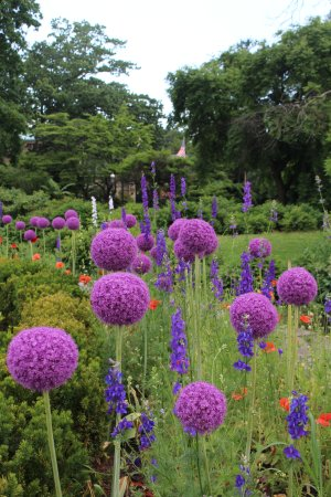 Snug Harbor Cultural Center : summer blooms