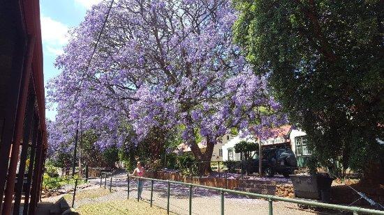 Graskop, South Africa: 20171113_100518_large.jpg
