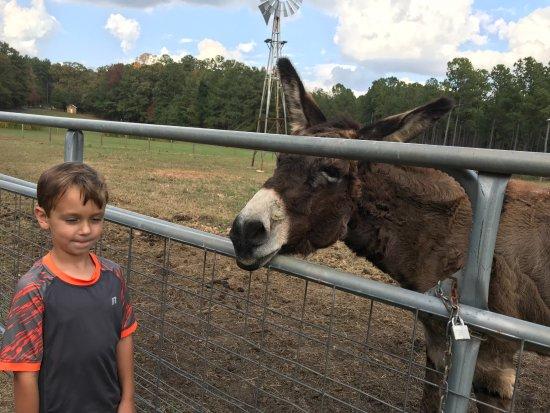 Jackson, Géorgie : Donkey says hi in the nature center