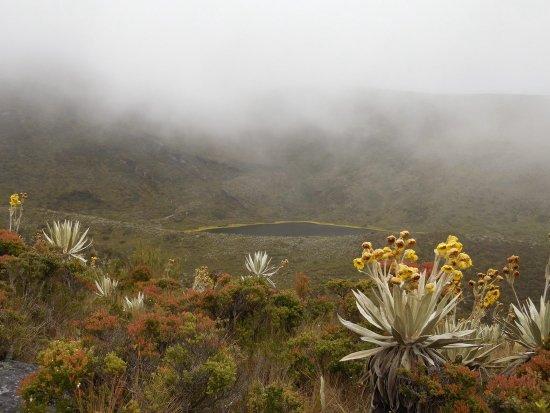 Cundinamarca Department, Kolumbien: Beautiful vegetation around a small lake in Parque National Chingaza.