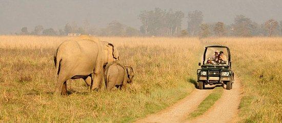 Jim Corbett Cab: Jim Corbett National Park Jeep Safari Booking