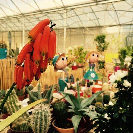 Pépinière Jeanne Horticulture : pour les amoureux des plantes