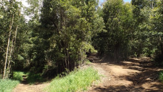 Cerro Caracol: sendero