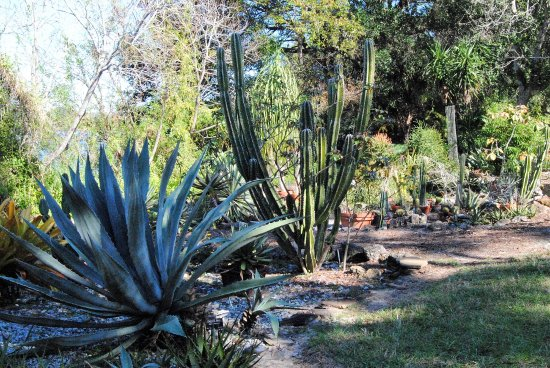 University of South Florida Botanical Gardens, Tampa