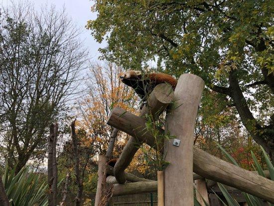 Birmingham Wildlife Conservation Park: photo1.jpg