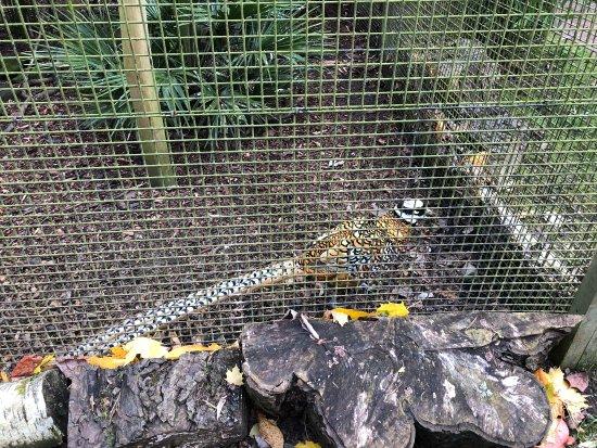 Birmingham Wildlife Conservation Park: photo2.jpg