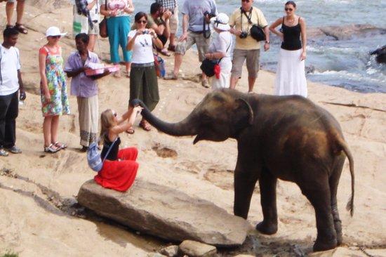 Dambulla, Sri Lanka: Pinnawala Elephant Orphanage