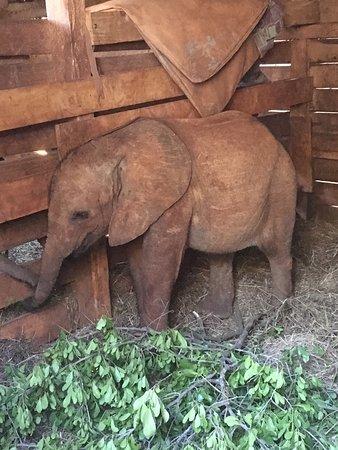 David Sheldrick Wildlife Trust: photo1.jpg