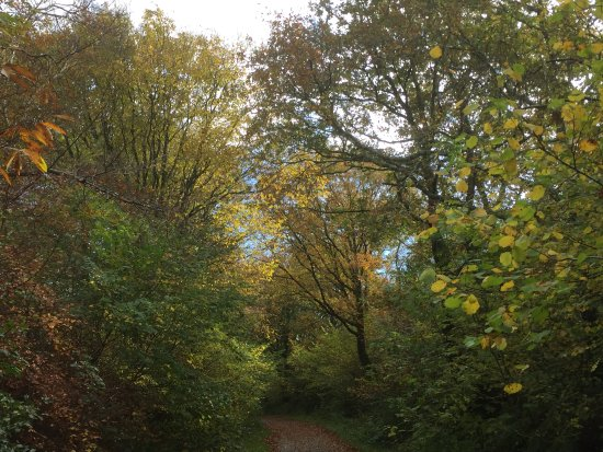 Lifton, UK: view through the trees on one of the walks