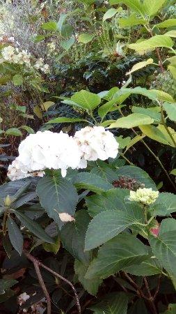 Botanic Gardens : DSC_3613_large.jpg