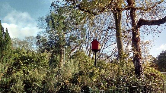 Botanic Gardens : DSC_3609_large.jpg