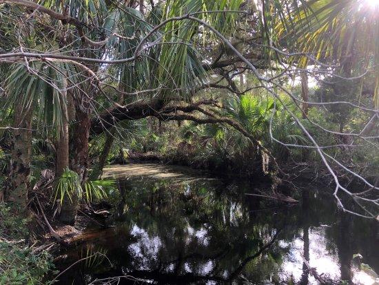 Alligator Creek Preserve: Land Before Time