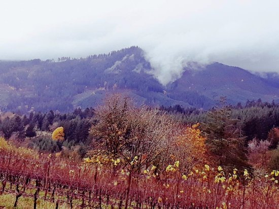 Forest Grove, OR: Clouds creeping over the mountain towards David Hill Winery